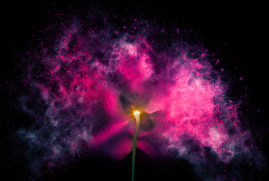 Creating an exploding flower effect in Photoshop by Padma Inguva