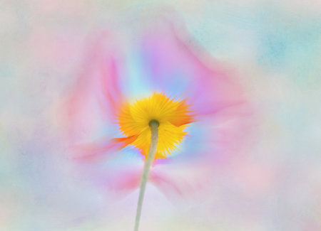 Adding textures & blur to Flower Photography using Photoshop