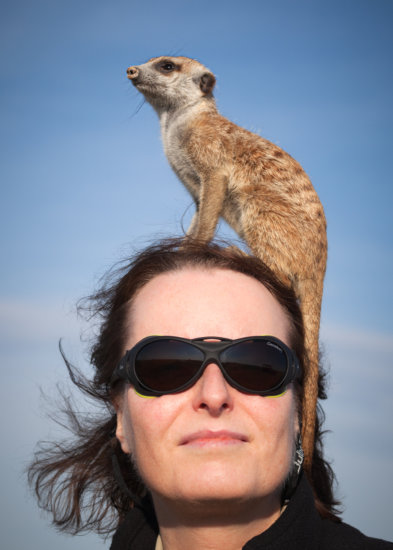 Wildlife Photography of Meerkat with Karin De Winter captured with a normal camera lens