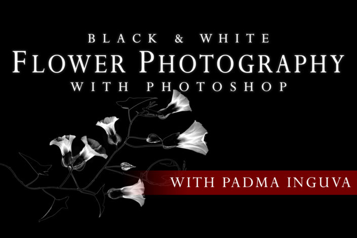 Black & White Flower Photography with Photoshop Tutorial Cover Page by Padma Inguva.