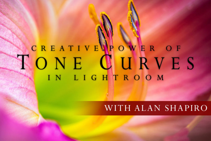 Cover for Creative Power of Tone Curves in Lightroom Online Class