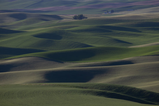 Under exposed Nature Photography from Palouse, Idaho by Padma Inguva