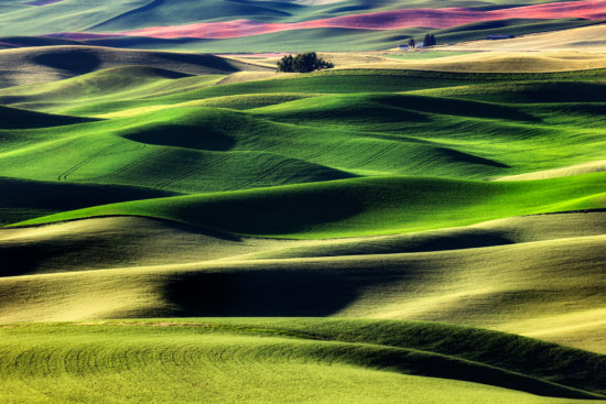 Landscape photography processed using NIK Color Efex Pro from Palouse, Idaho by Padma Inguva