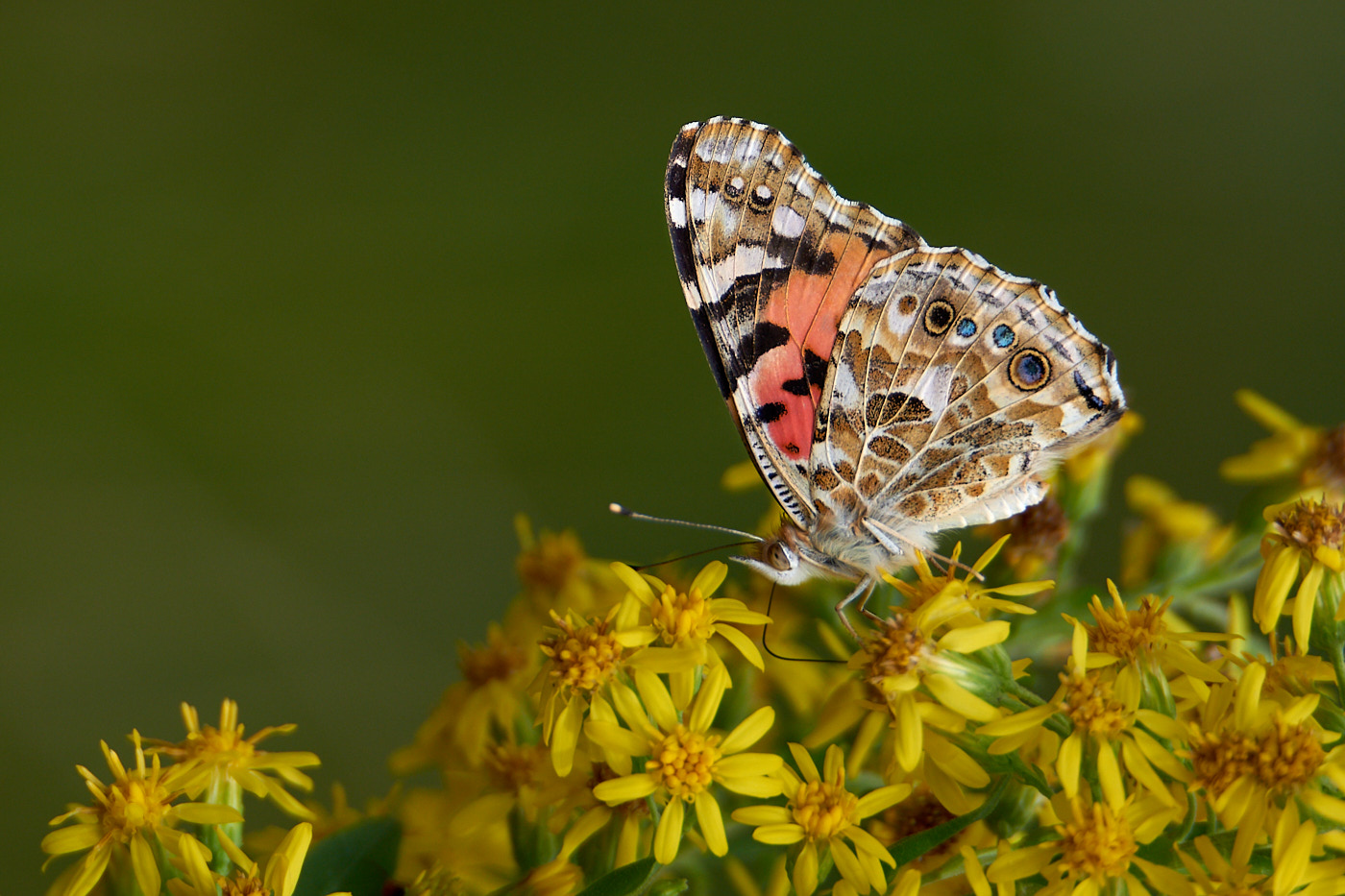 Essential Macro Photography Equipment for Beginners