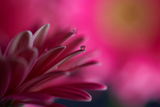 Macro photography with a water droplet on a plant by Peter Dam