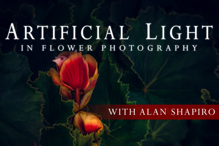 Cover for Artificial Light for Flower Photography Online Class by Alan Shapiro