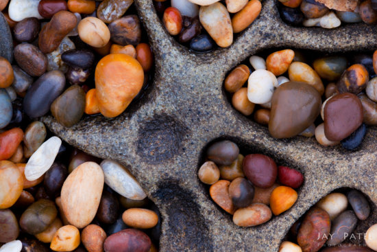 Macro photography created using focus stacking in Photoshop - Pebble Beach, California by Jay Patel