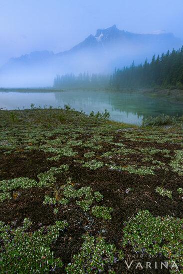 Interesting landscape surrounding the lake, Graveyard flats, Banff National Park, Canada by Varina Patel